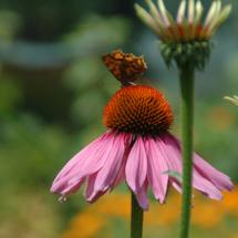 De zonnehoed en de vlinder